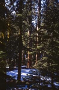 West Coast - 67