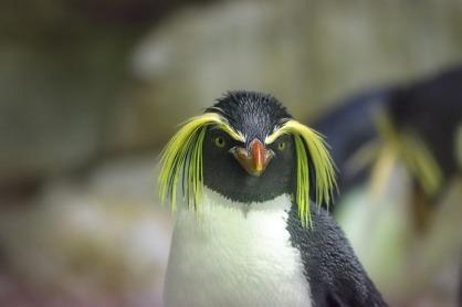 penguin-2104173_640