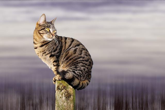 cat-1890499_640