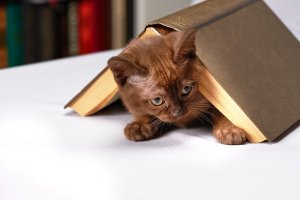 cute tortie kitten hiding under an overturned hardcover book on a white tabletop.