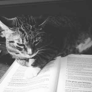 cat sitting on an open book